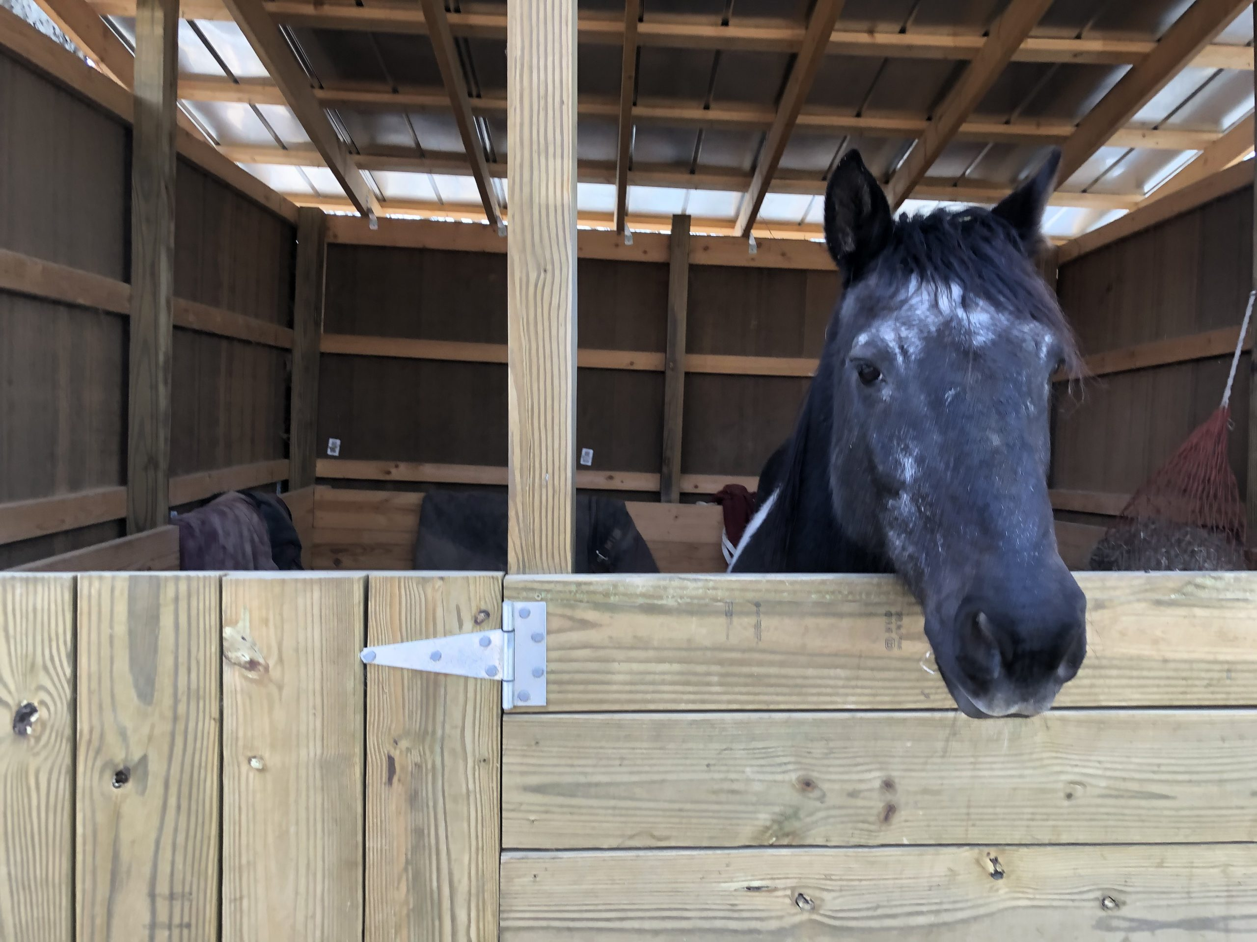 Hoofbeats goes 'home' to Fairfield farm